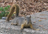 I loved this squirrel although it appeared anxious about my presence. As far as I know, squirrels haven't been introduced to Australia & NZ.