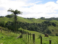 Typical north island vegetation and relief.